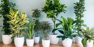 معرفی ۵ گیاه تصفیه کننده هوا و زینتی برای منزل