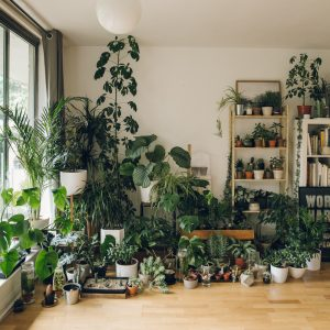 چگونگی ساخت یک گلخانه کوچک