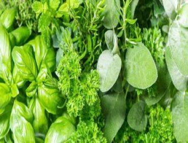 سبزهای مفید و پر خاصیت برای بدن !