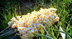 نکاتی برای نگهداری از گلهای بهاری